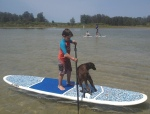 Coco enjoying a SUP ride